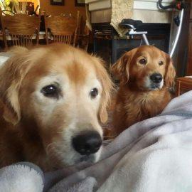 Buddy & Cedar