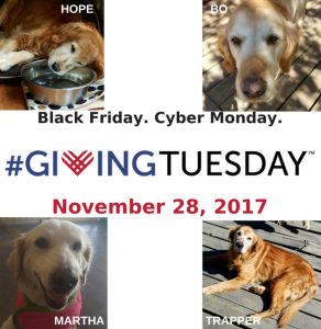 #GivingTuesday for Goldens