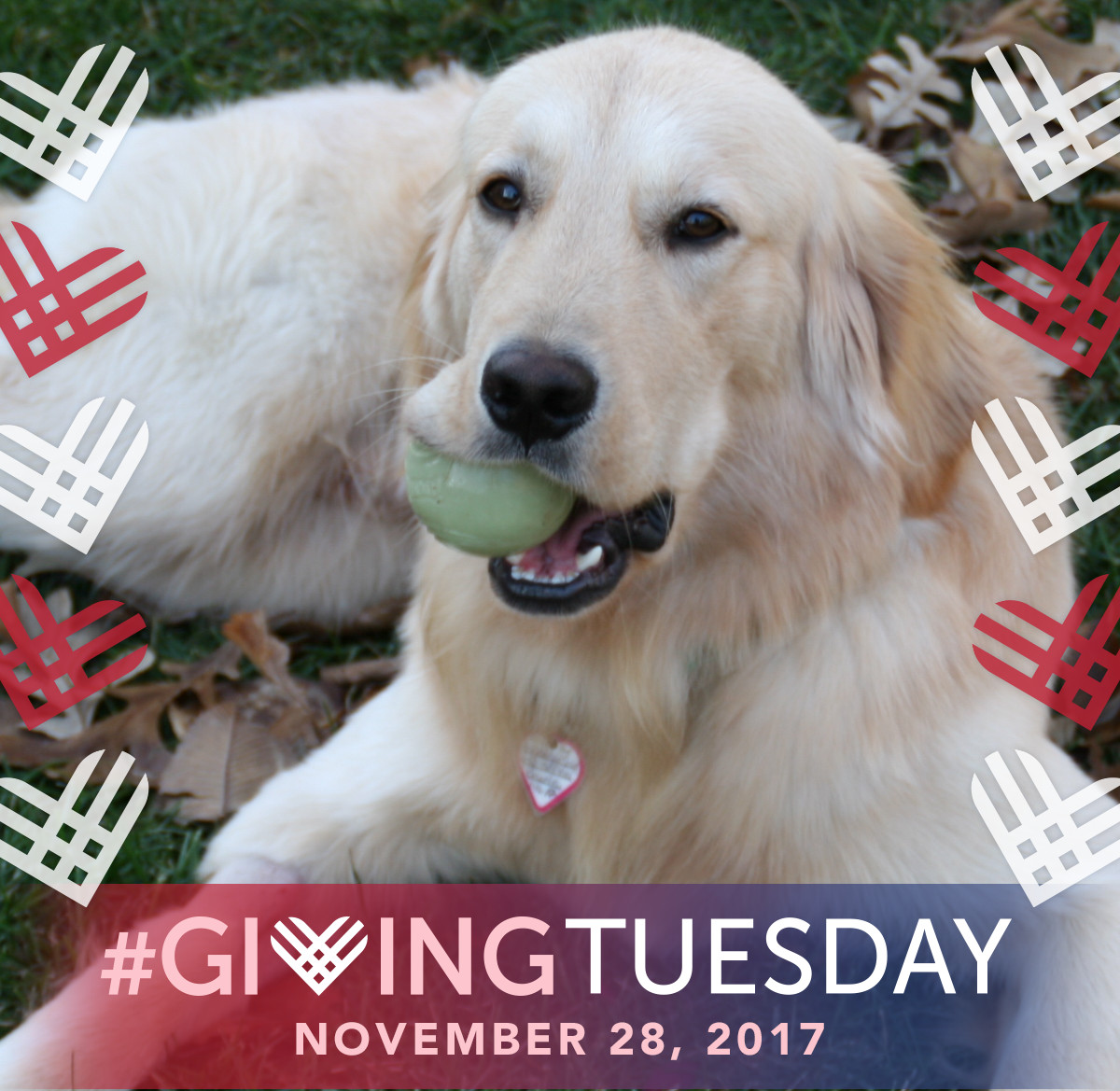 AGaG's #GivingTuesday Golden