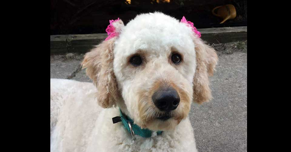 Honey - I am a very active girl that needs to go to a home with adults.