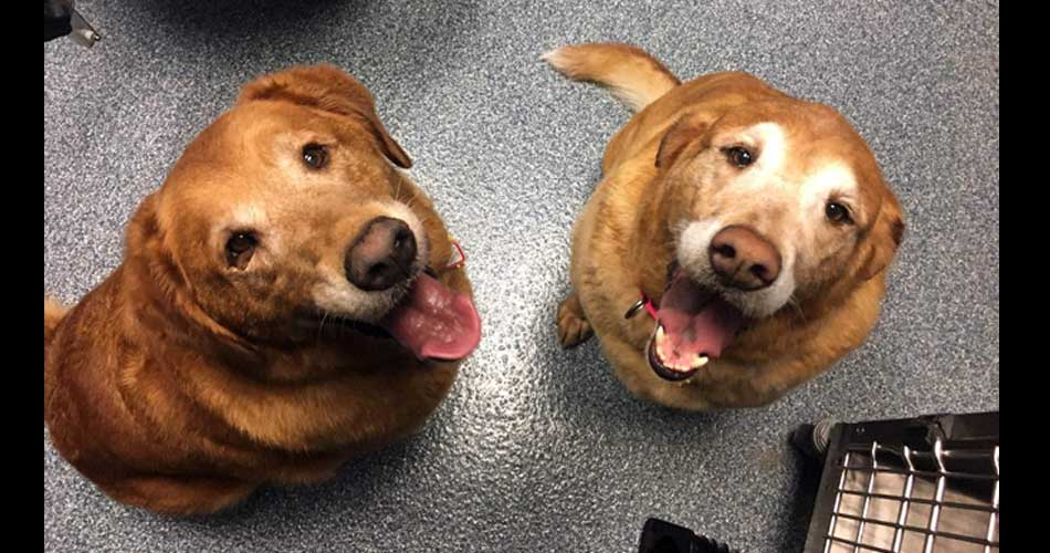 Canelo & Cookie - We have lived together our whole lives, so we need to stay together in our forever home.