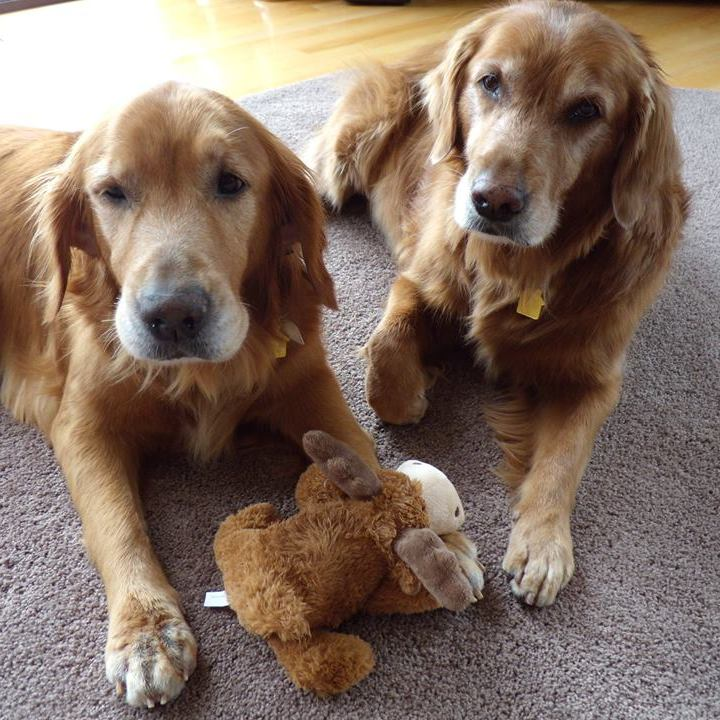 Kodi & Jules