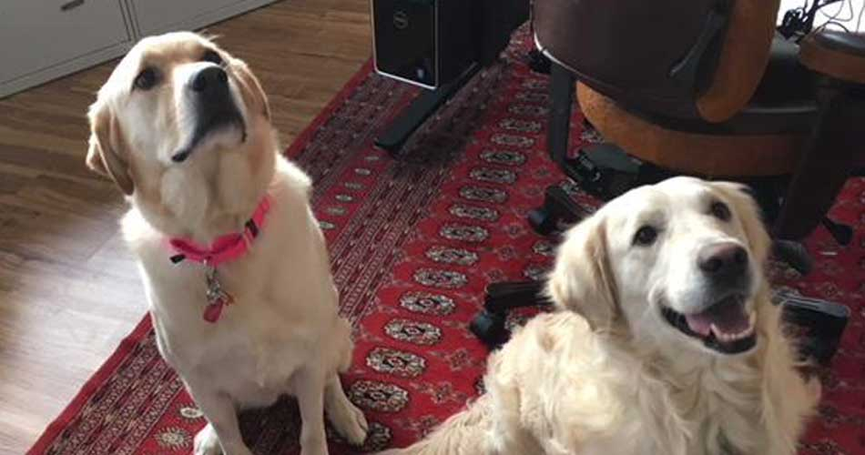 Bella & Leo - We are a bonded pair and need to go to a home together.