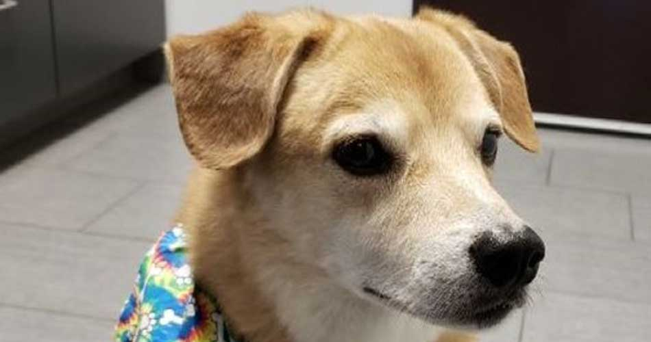 Shredder - Are you looking for a sweet, petite, easy going boy?