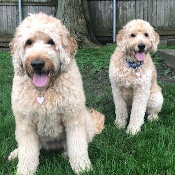 Cosmo & Luna