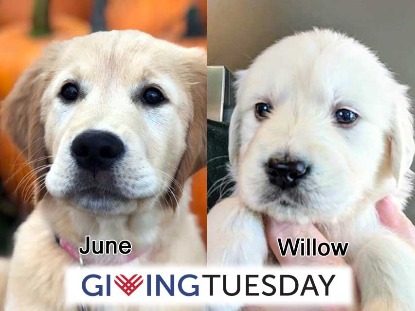 #GivingTuesday for June and Willow