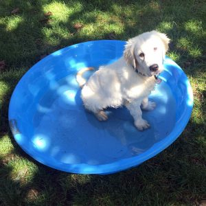 Willow in her pool