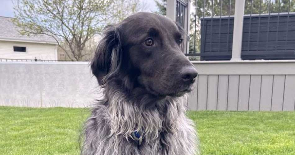 Buddy - what would be best for me is a fenced yard, and a playful sibling