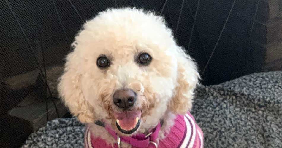 """Dolly Lock - When I have other dogs to play with, I'm a """"happy wiggly girl!"""""""