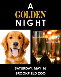 A Golden Night