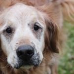 HARLEY - Will you be my forever family?