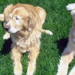 IGGY & MAX - Double the Golden Love!