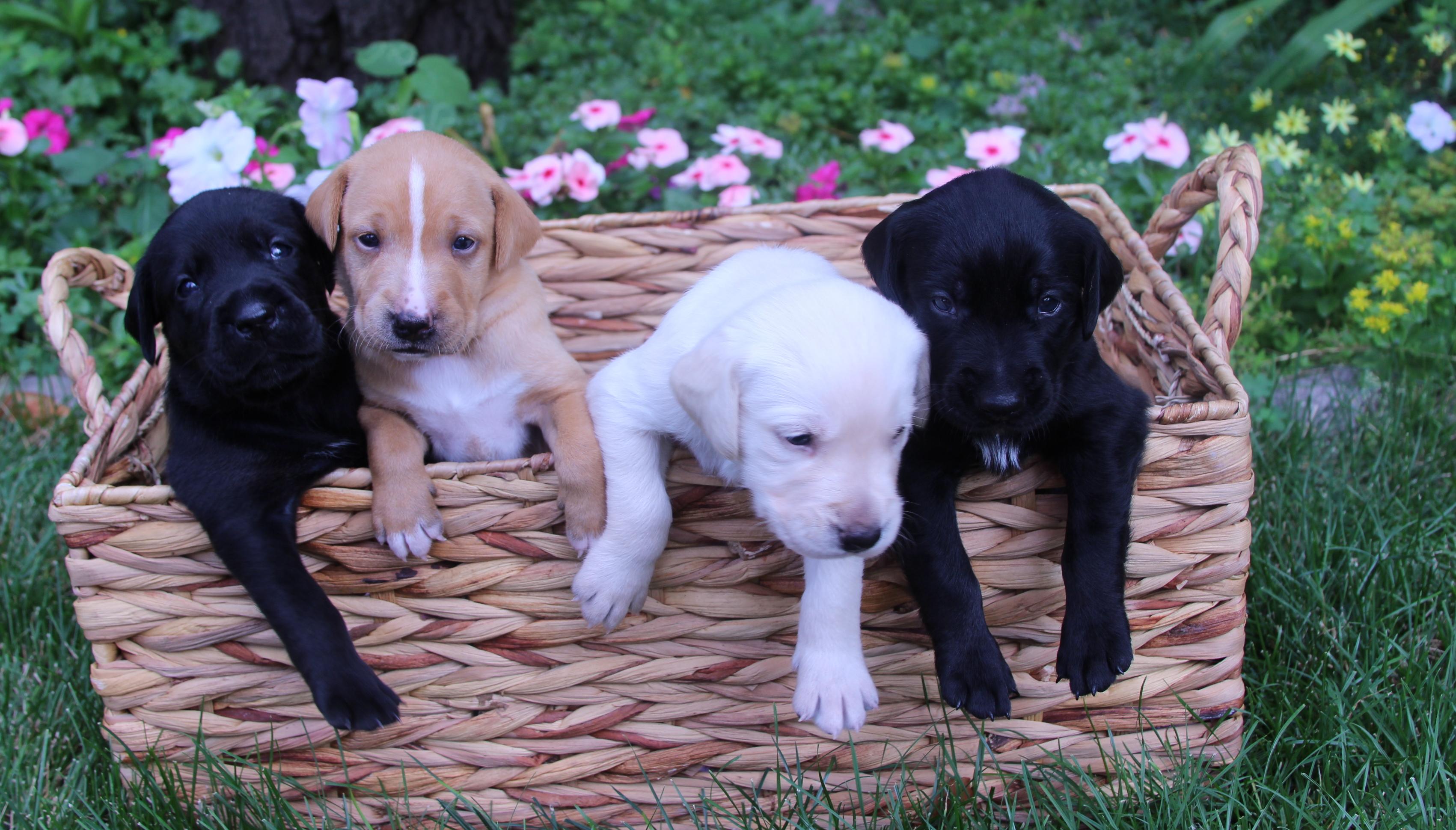 PUPPIES - We are cute little bundles of joy!!