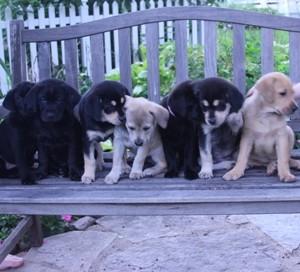 Puppies Square 1