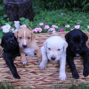 Puppies Square