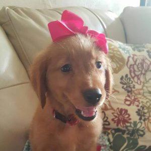 puppy-2-square