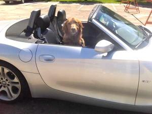 Quinn in Car adj