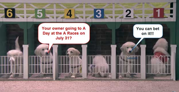day_at_the_races_starting_gate