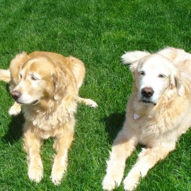 Iggy & Max