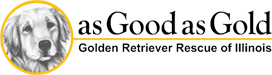 As Good As Gold – Golden Retriever Rescue of IllinoisChelsea & Shadow - As Good As Gold - Golden Retriever Rescue of Illinois